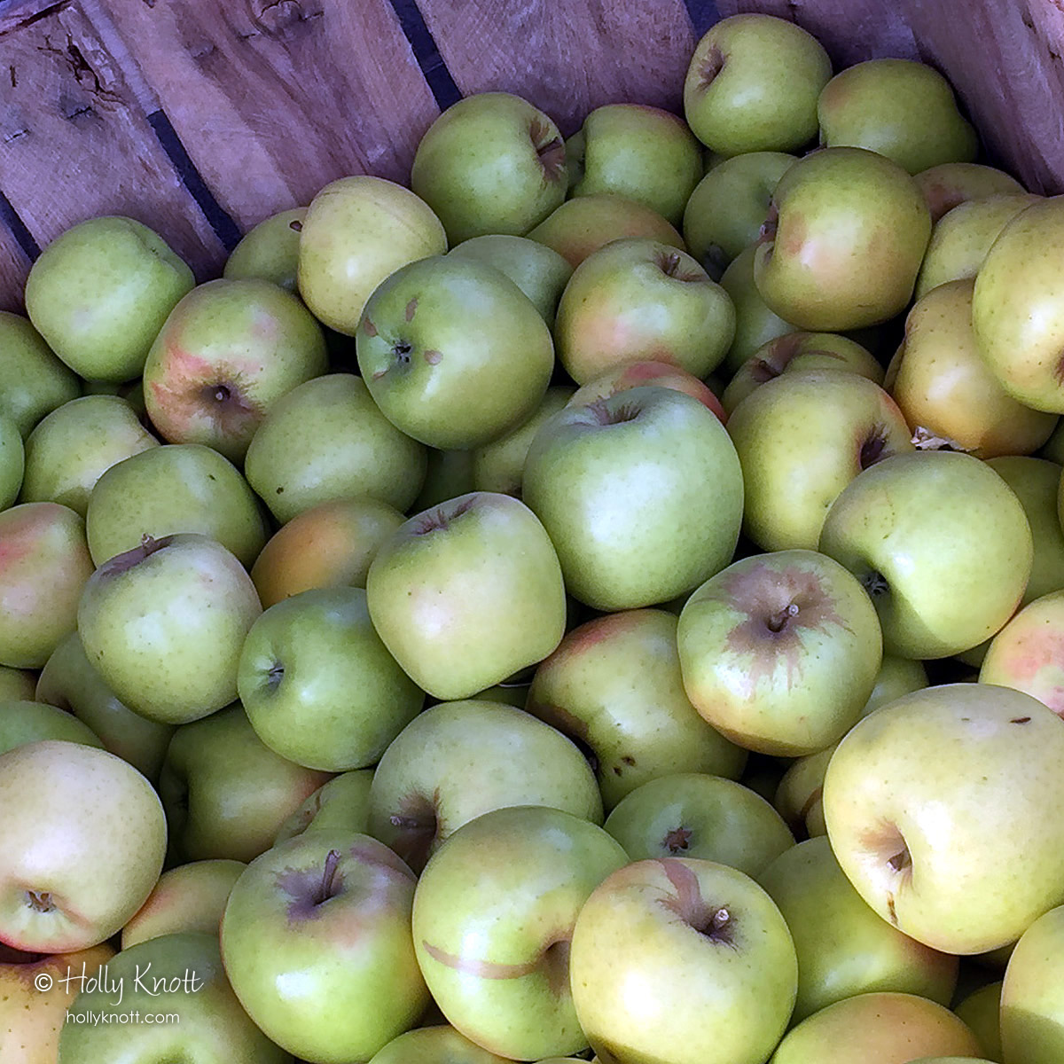 Colorful apples in a bin at Taft Farms, Great Barrington