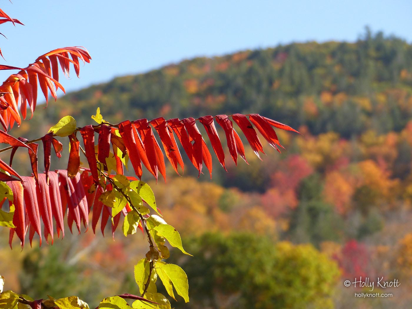 The sumac was brilliant this year
