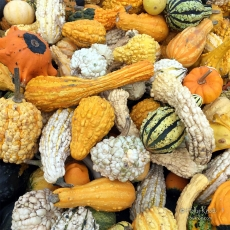 Colorful gourds of all sizes and shapes!