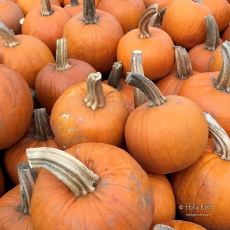 Pumpkins!