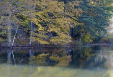 Reflections on Laurel Lake, Lee, MA
