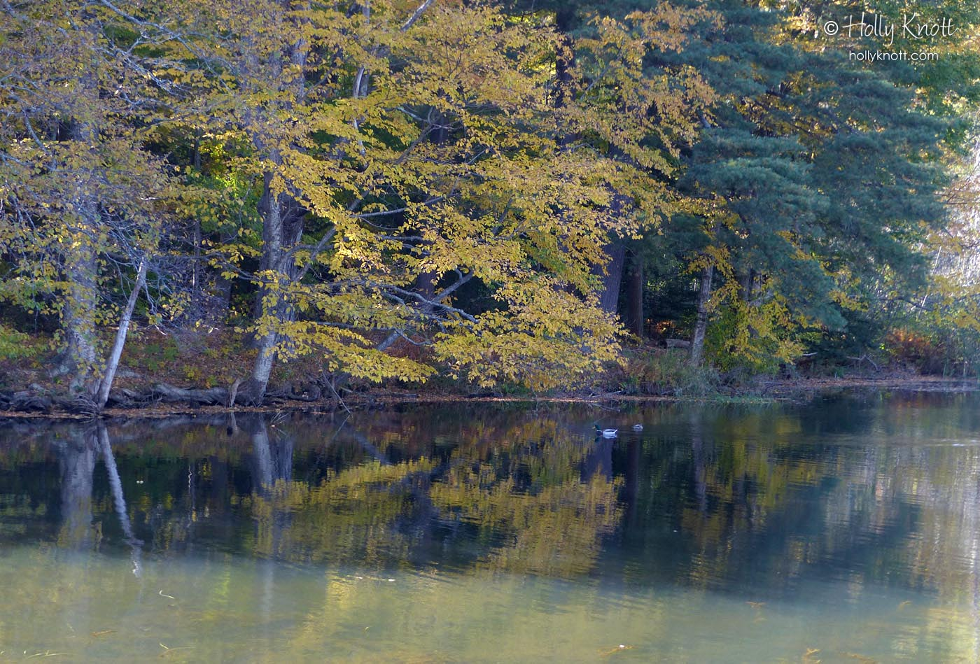 Reflections on Laurel Lake, Lee, MA
