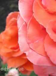 Petal layers