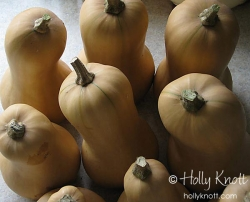 Butternut Squash family