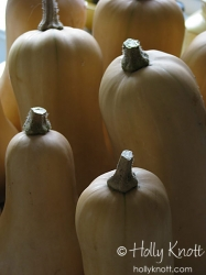 Butternut Squash abstract 4