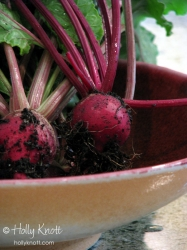 Fresh beets, fresh picked