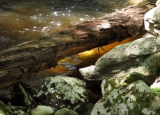 waconah-falls-11