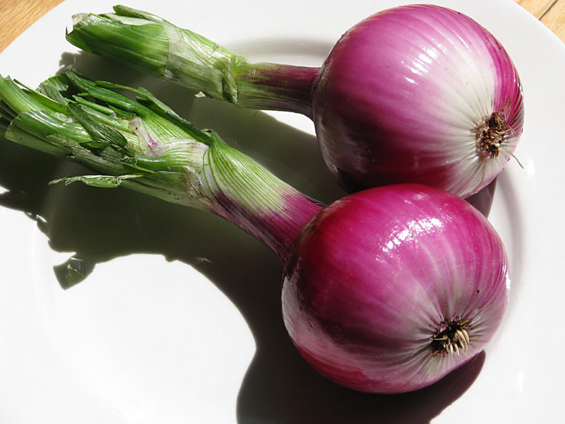 Red Onion Illustration Paintings, Drawings, M...