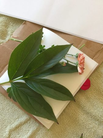 Peony leaf ready for dyeing