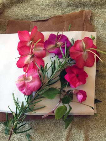 Impatiens and rosemary