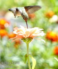 picture of a hummingbird in a garden