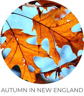ph-autumn