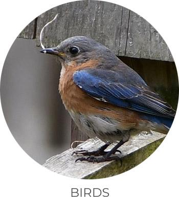 ph-birds