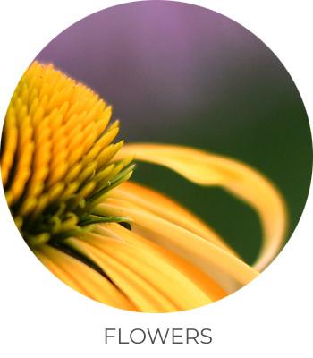 ph-flowers